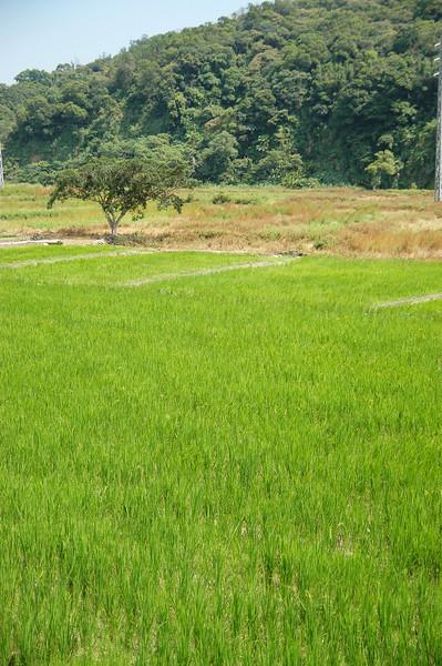 桃竹20鄉道上的小田畝