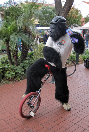 Gorilla at Farmers Market, May 17th