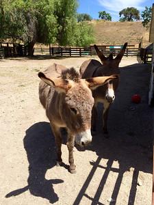 Actually, Kate has 2 donkeys