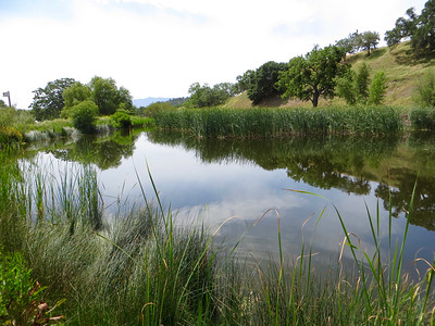 I love the pond