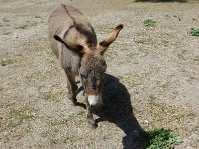 Kate's donkey