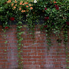 Vines and flowers decorate brick wall