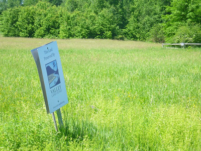 Conserved meadow