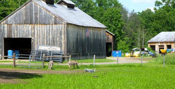 Donkeys at Sunny Brook Farm