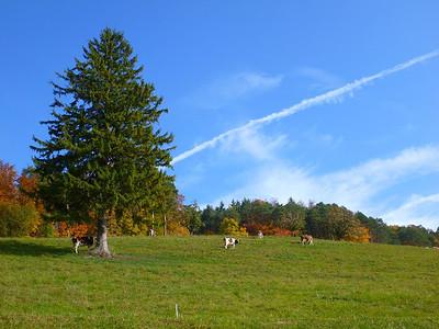 Meadow, cattle, sky