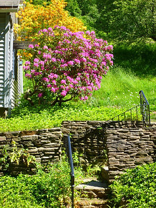 Wall and flowers