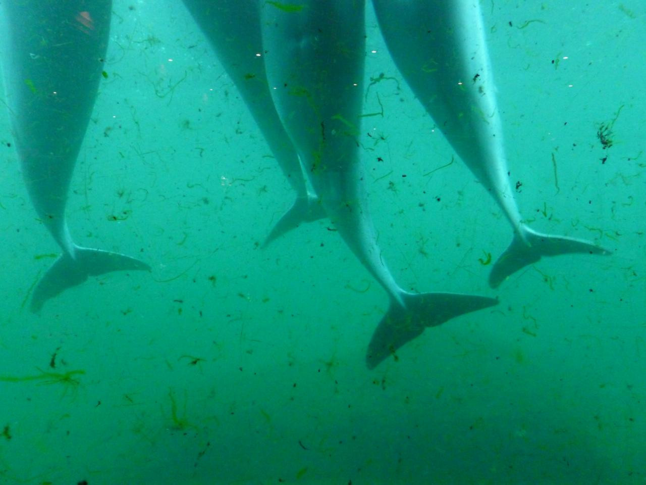 Dolphin tails