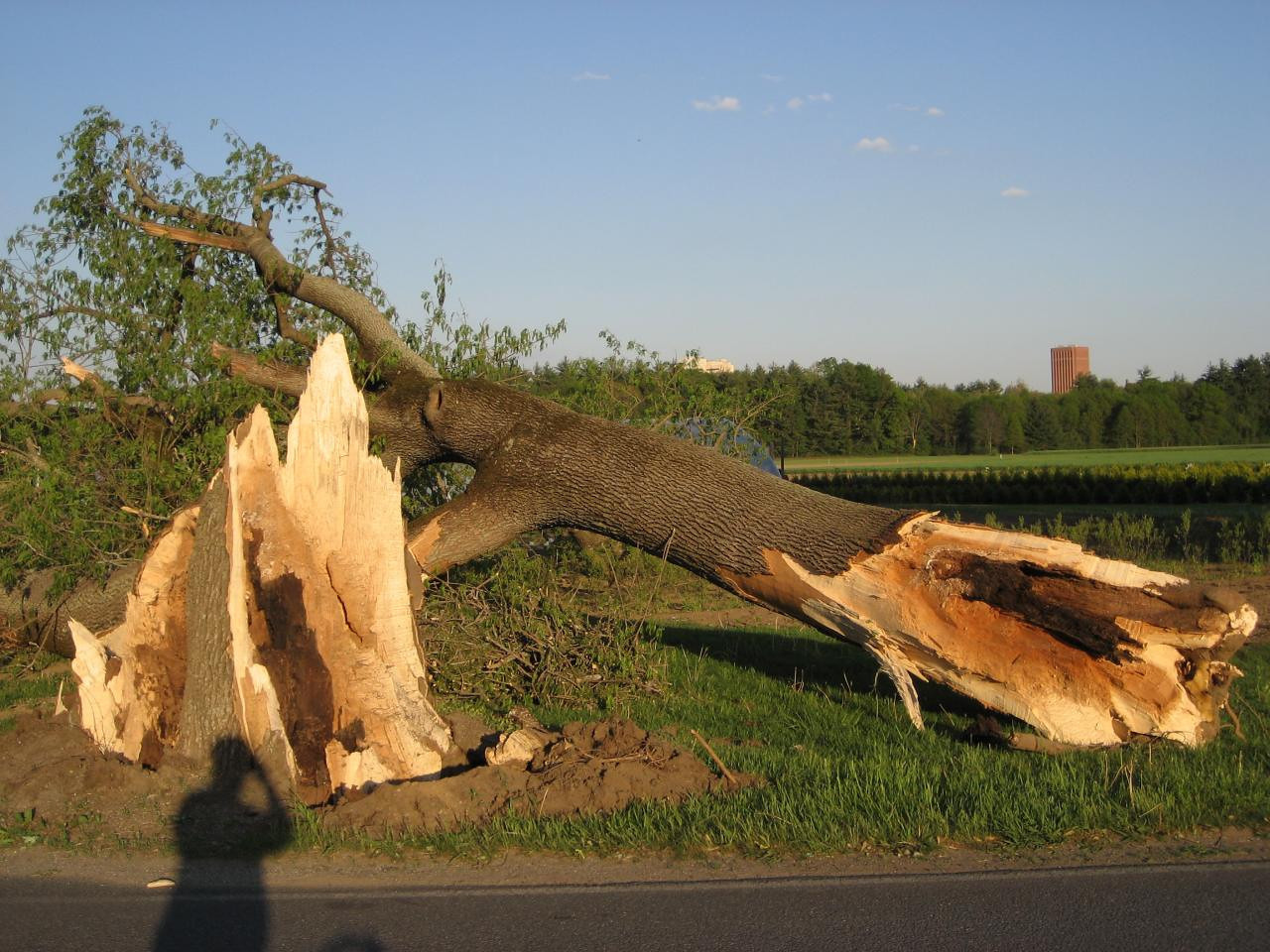 Windstorm damage