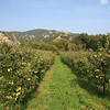 <b>20 Sept</b> Orchards by the Danube as the scenery starts to get more interesting