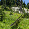<b>26 July 2013</b> Frisby Ridge - gorgeous alpine meadows full of wildflowers