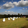<b>6 Aug</b>All through Sweden and Norway, all the silage is wrapped in bright white plastic wrapping - it looked terribly neat and tidy out in the fields