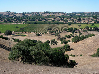 Views on vineyards (Oct 2007)