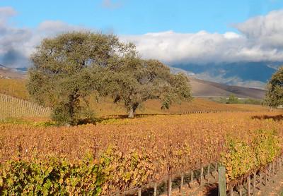 Vineyards in November