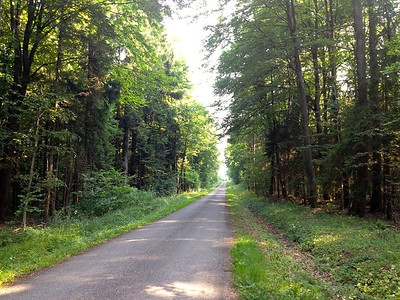 La Calonne: a small hilly road in the forest