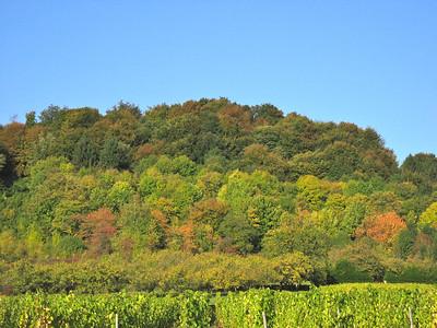 Cotes de Meuse in Fall