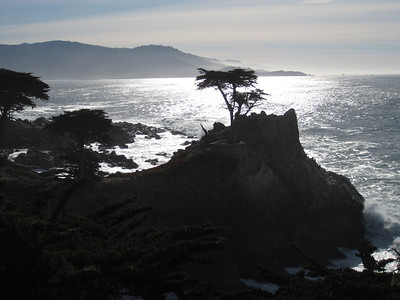 The famous lone cypress