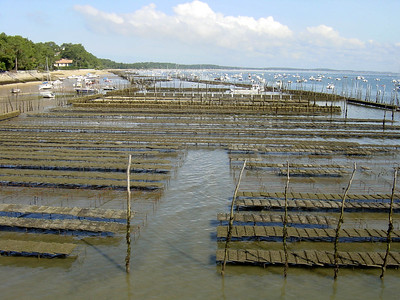 oyster fields in Cap Ferret.