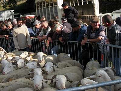 Do you want to buy a sheep?
