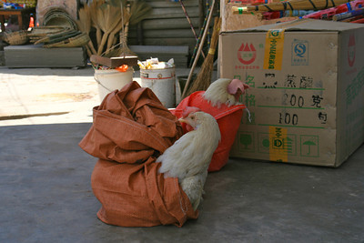 Chickens in a bag, you know?