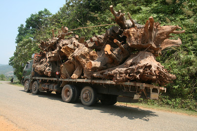 A big truck of huge old tree trunks that passed us very slowly on the road and a day later we saw it broken down. Some other tourists told us the wood had been harvested from the bottom of a valley flooded for a reservoir. I don't know if that was really the case, but it is the sad truth that where areas get flooded for hydro-electric dams - particularly hastily planned ones - human settlements and animal habitats disappear and even the valuable wood goes to waste.