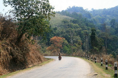 Adam on his way uphill. In this case it really wasn't that steep, he's just making it look hard. Just kidding. The engineers of roads in Laos must have a secret wish to destroy the engines of all their trucks and the legs of all unsuspecting bike tourers.