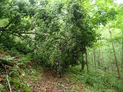 2015 Trail Work