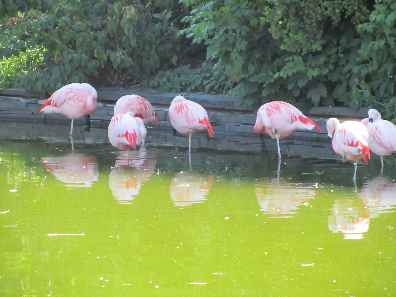 Flamingos wading in toxic waste.