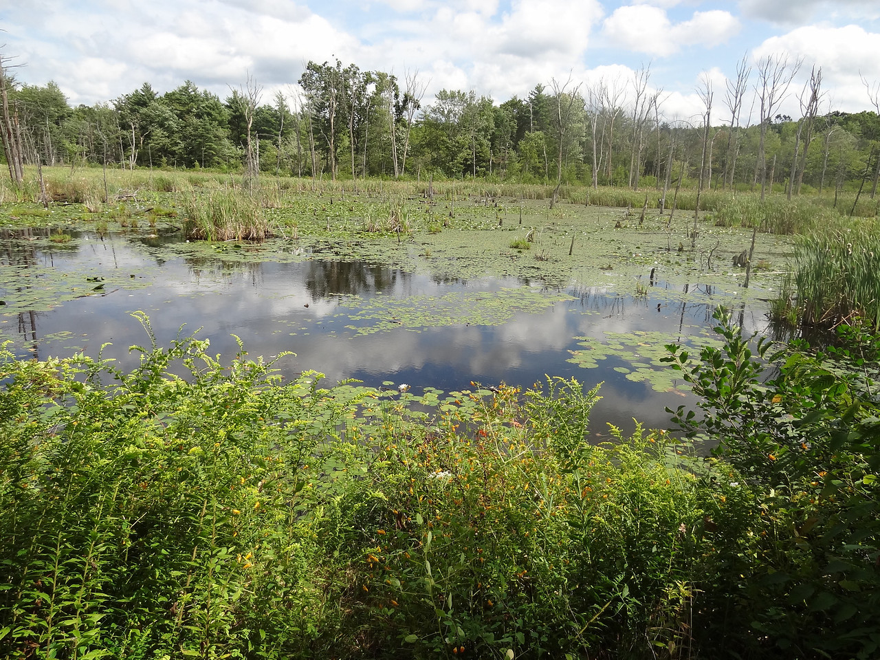 We passed a number of swamps like this one, with a plethora of flora and fauna.