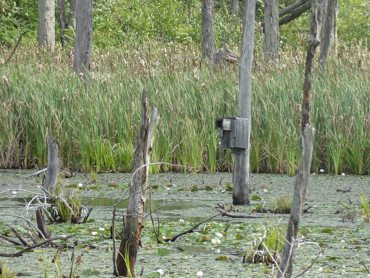 A wood duck nesting box.