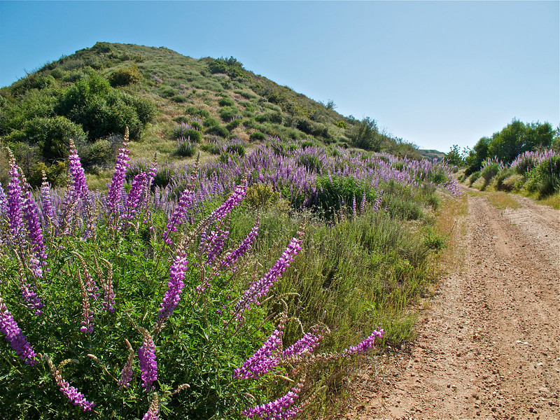 Lupine provided a glorious border along sections of the ride. And the birds were singing their hearts out.