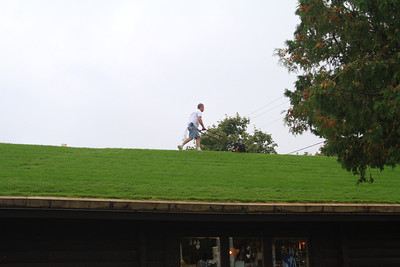Talk about lawn care!
