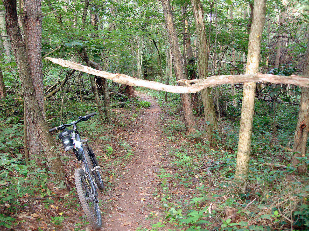 Low Limb on trail - Before
