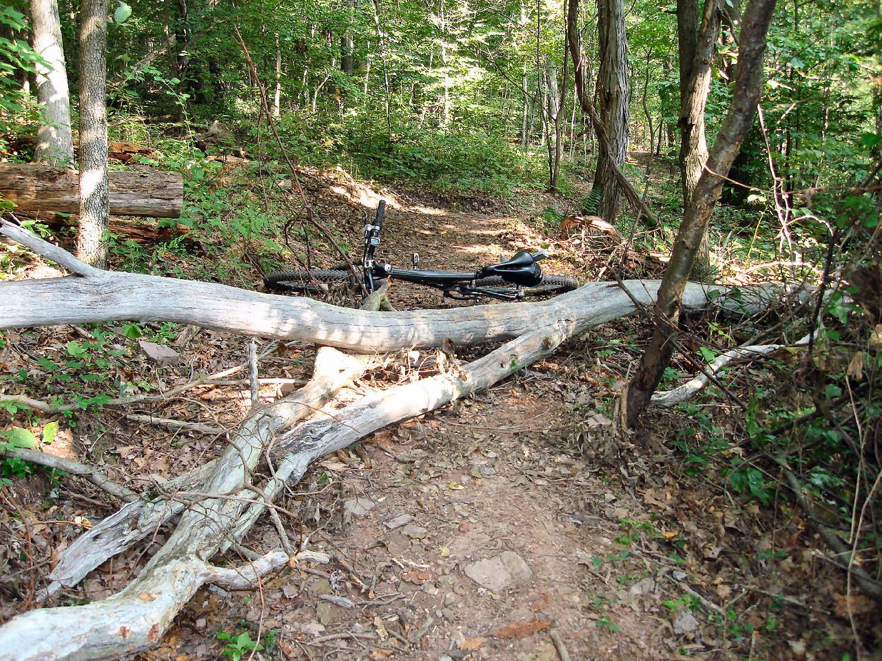 Fallen tree - before