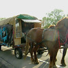 This guy was in the news as he passed through the area.  He was diagnosed with lymphoma last year, and as a result, decided to travel the country.  He has a history with horses, being from Montana.  So he built this wagon, outfitted it with 2 dogs, 2 horses, and $75, and headed east.  After he reaches Maine, he'll turn back to the west coast.  Then on to Alaska.