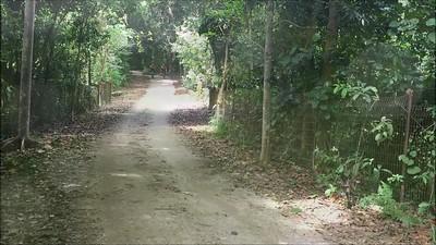 THRILLER: ONE DAY IN PULAU UBIN