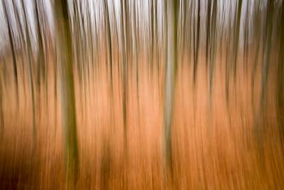Verschwommener Wald, Münstere Alte, Oberpeiching, Bayern, Deutschland