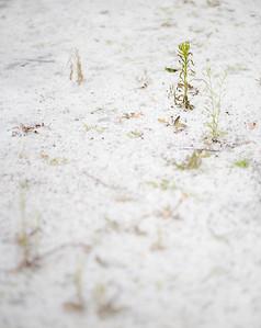 Pflanzen im Salz, Augsburg, Schwaben, Augsburg, Bayern, Deutschland
