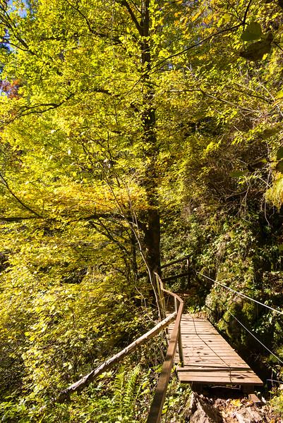 Starzlachklamm im Herbst, Schwaben, Allgäu