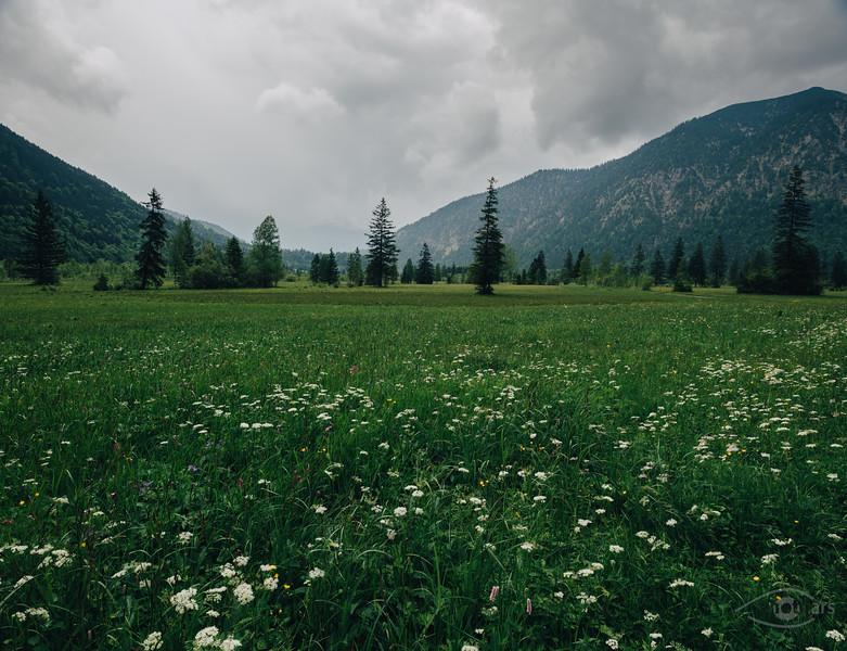 Blumenwiese bei Oberammergau, Bayern, Deutschland
