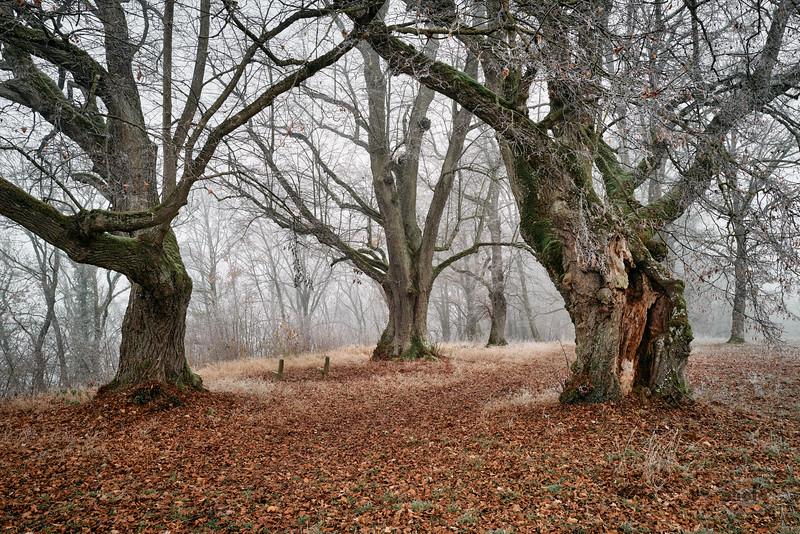Bäume bei der Gruftkapelle St. Antonius und St. Anna, Antoniberg an der Donau, Stepperg, Bayern, Deutschland