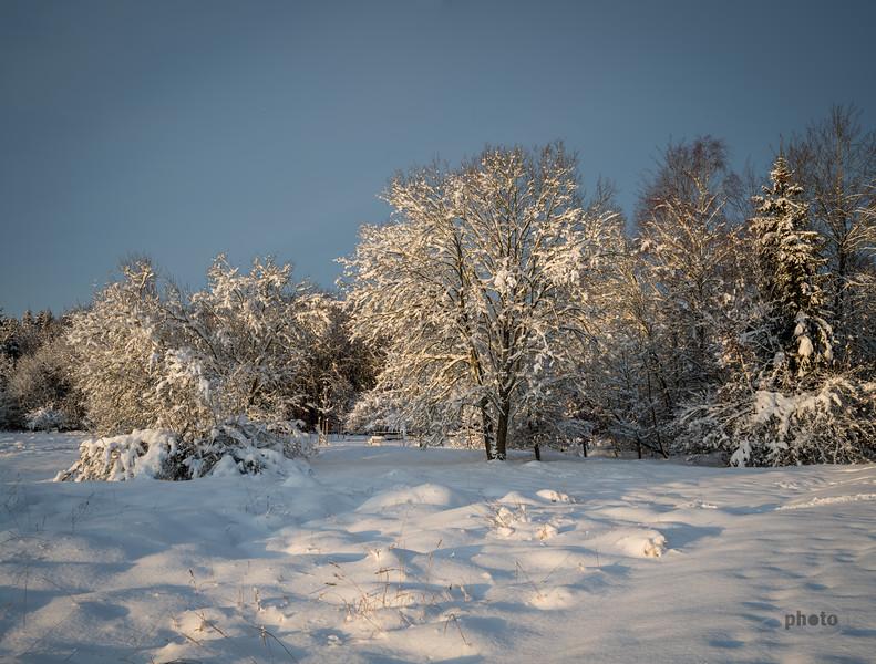 Winterlicher Wald im Morgenlicht, Deuringer Heide, Schwaben, Bayern, Deutschland
