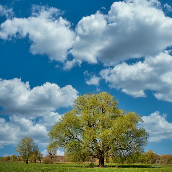 Baum auf einer Wiese, Donauwörth, Schwaben, Bayern, Deutschland