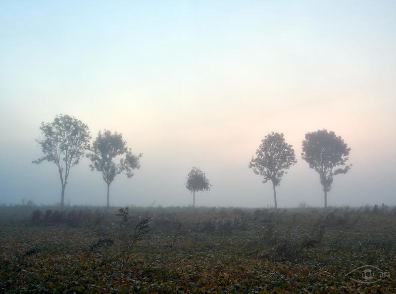 Sonnenaufgang mit Nebel, Genderkingen, Schwaben, Bayern, Deutschland