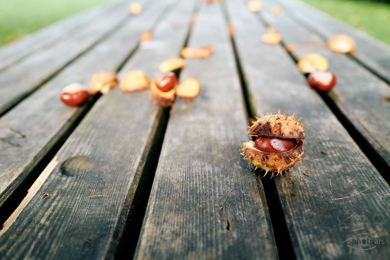 Herbstliche Kastanien auf einem Tisch, Oberbayern, Bayern, Deutschland