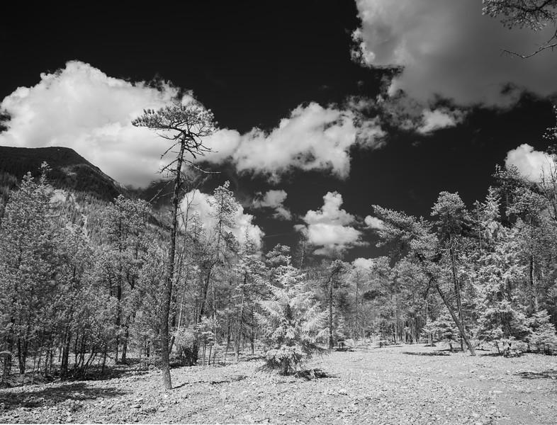Sunkenlaine bei Garmisch-Partenkirchen, Oberbayern, Bayern, Deutschland