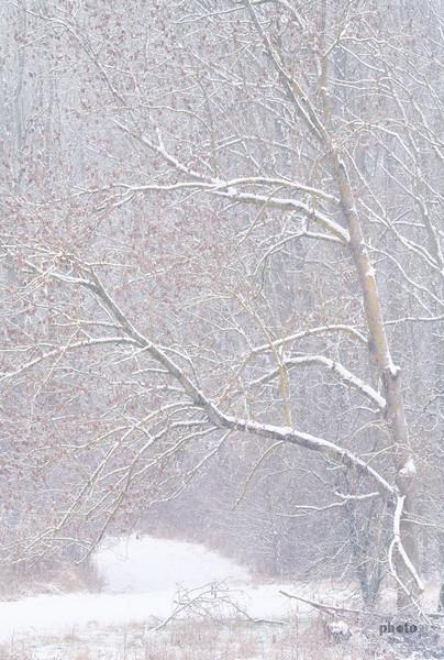 Bäume bei Schneefall am Lech, Rain am Lech, Schwaben, Bayern, Deutschland