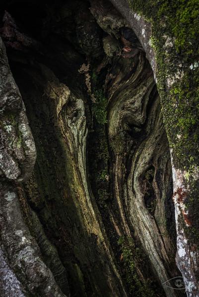 Baumstumpf, Plitvicer Seen, Kroatien