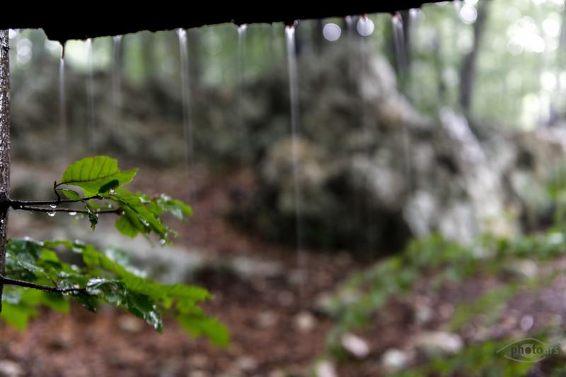 Regentropfen an einer Schutzhütte im Wald, Plitvicer Seen, Kroatien