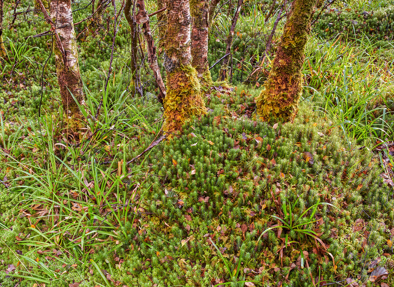 Im Wald bei Kinlochewe, Highlands, Schottland