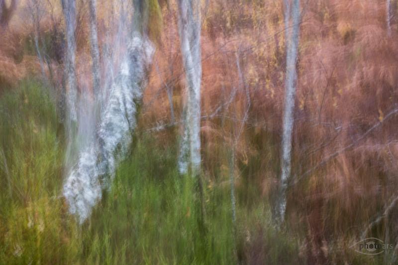 Woodland Tail am Loch Maree, Highlands, Schottland